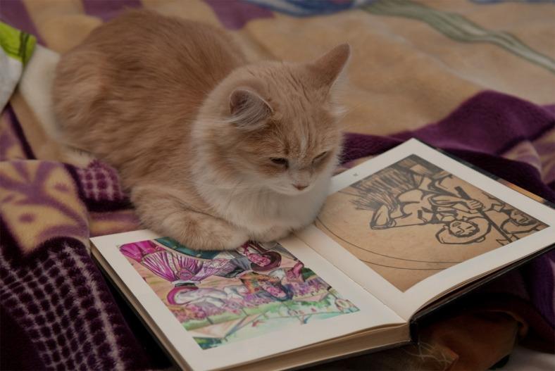 Os gatos são animais criativos e não é um dos melhores companheiros de viagem.